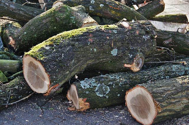 felled-tree-trunks-1100515_640